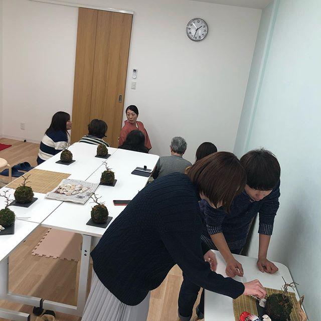 こんにちはコミュセンです️*お正月にピッタリのイベント、@monsoon_n.k さまの苔玉&お茶コラボイベントが1/14(火)に開催されました*#苔玉 って、とっても可愛いですね大体30分くらいで、この梅の苔玉は完成するそうですそして会議室2の一角にゴザがひかれ、和気あいあいとしたお茶会も開かれていました日本文化と園芸に触れられる素敵なイベント、ありがとうございました